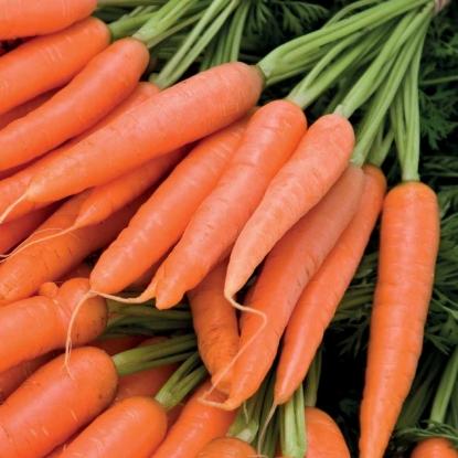 zanahoria para el sol cosmética natural